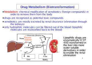 Lect_3_metabolism.pdf